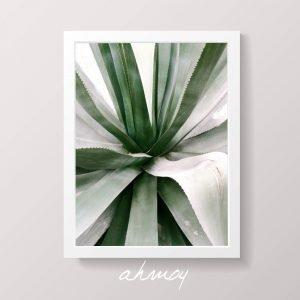 Green Agave Succulent Art Print