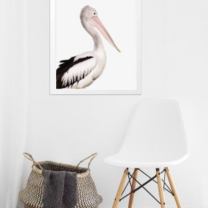 Coastal Pelican Fine Art Photography