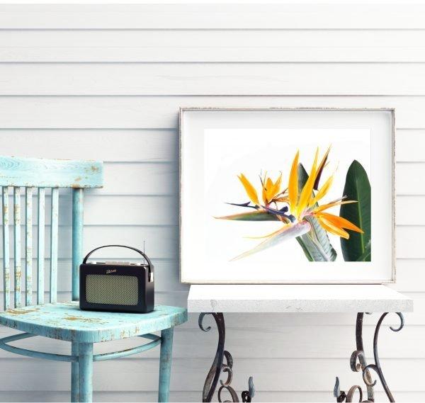 Bird of Paradise Flowers Print