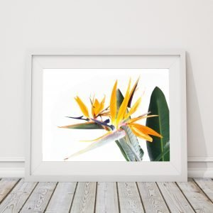 Bird of Paradise Flowers Print